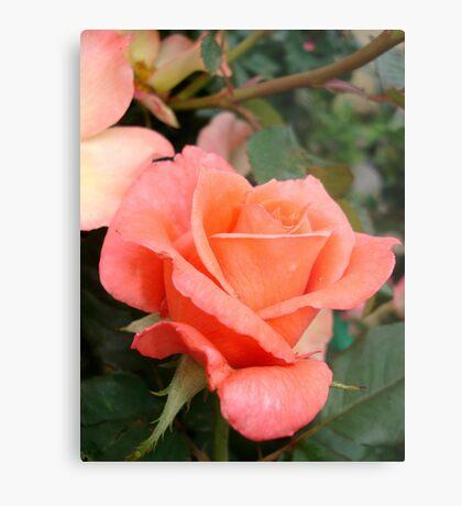 Coral Rose Metal Print