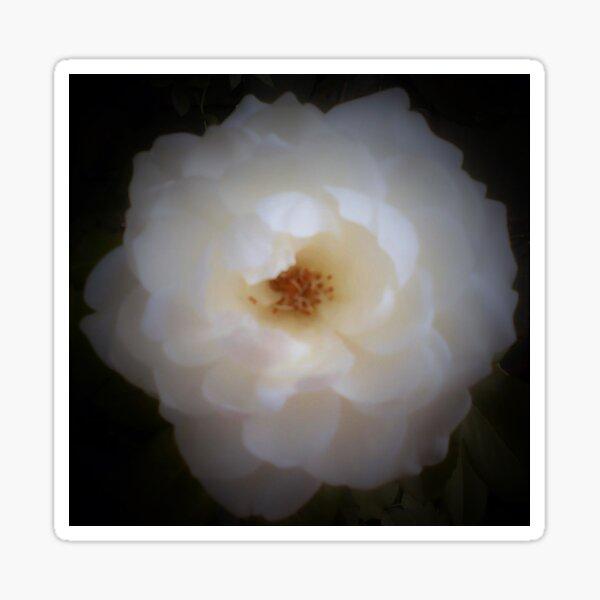 Rosa Blanca Sticker