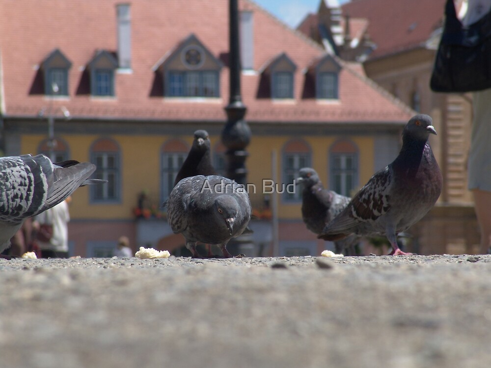 Pigeons in town by Adrian Bud