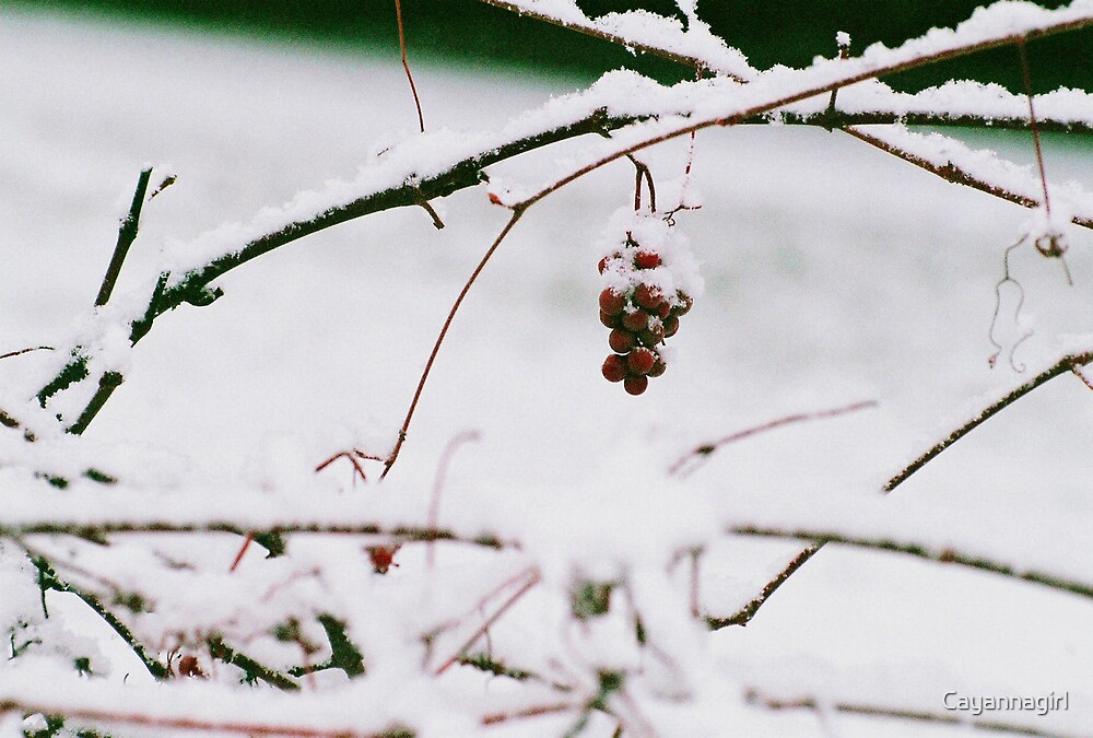 Wintry Grapes - Winter Series by Cayannagirl