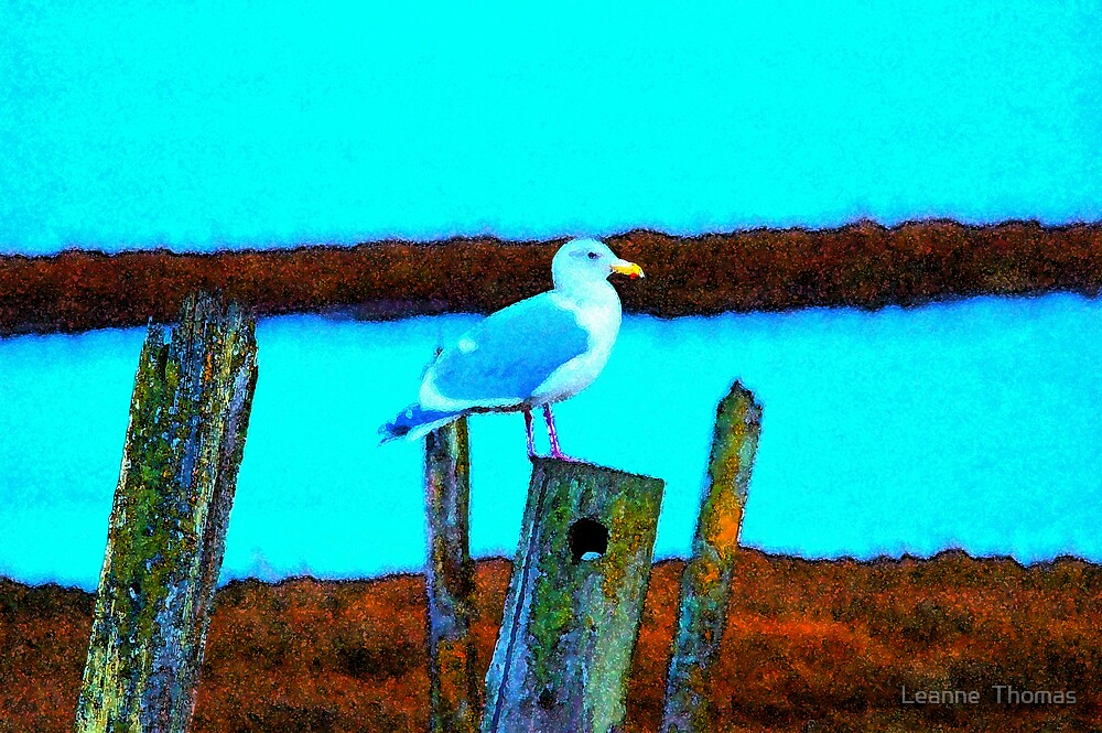 Seagull by Leanne  Thomas