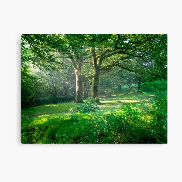 Sunlit Glade: Dartmoor (Near Goodameavy) Devon UK Canvas Print