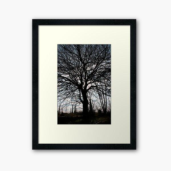 Sun In The Tree Framed Art Print