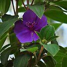 Solitary flower by resin8n