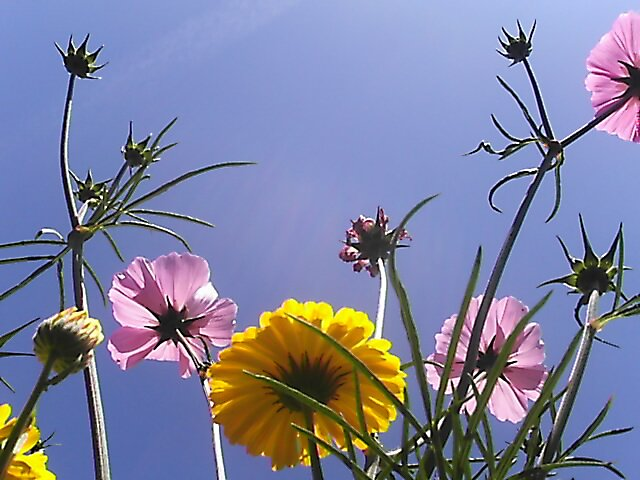 petals and sky by peadar