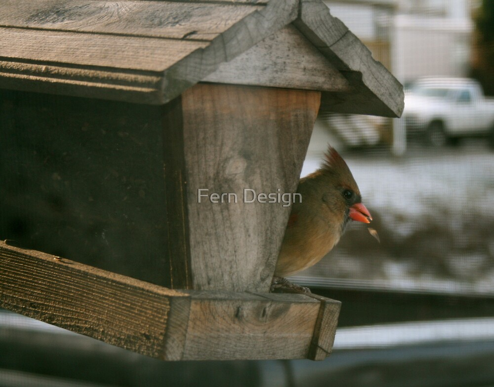 Female Cardinal  by Fern Design