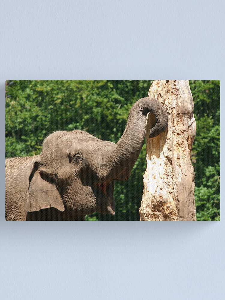 Alternate view of Trunk(s) Canvas Print
