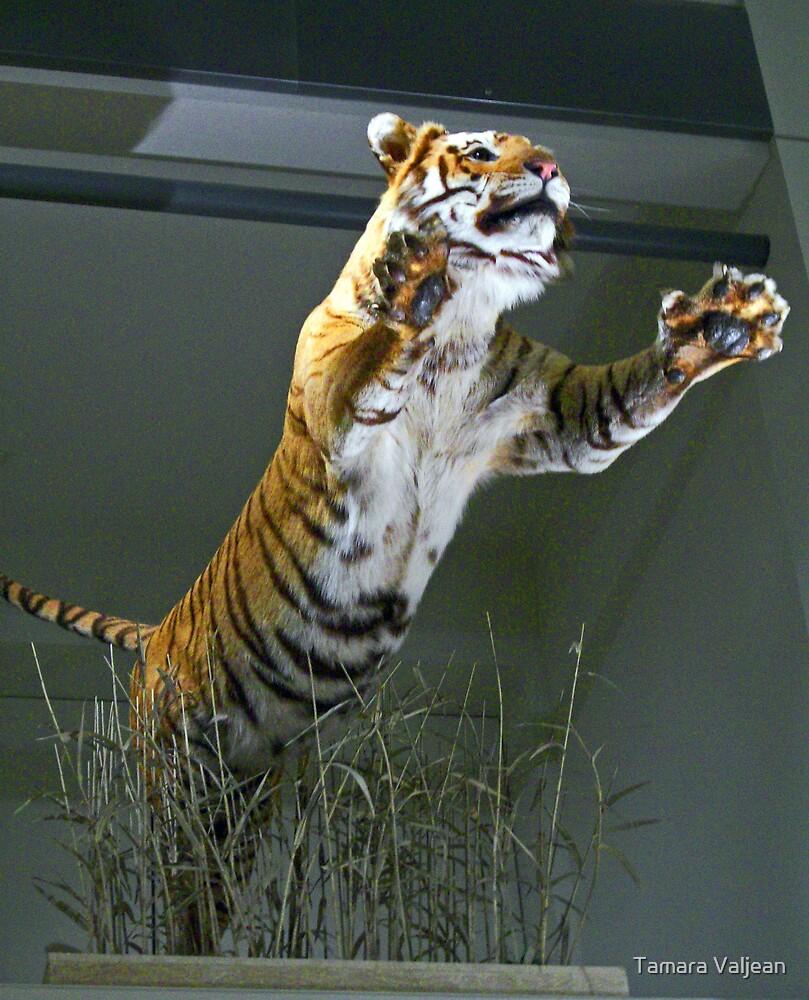 Tiger! by Tamara Valjean