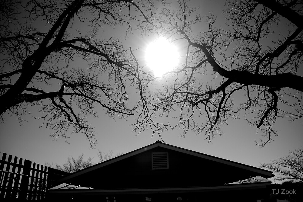 Reaching for the sun by TJ Zook