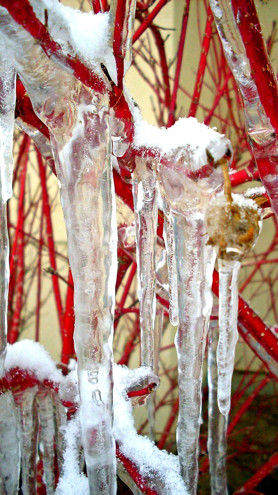 Red plant frozen solid by Julie Gappmayer