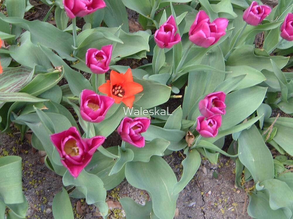 Random flowers by WaleskaL
