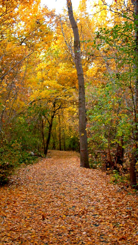 Trail into Autumn Leaves by Julie Gappmayer