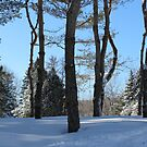 In The Pines ! by Elfriede Fulda