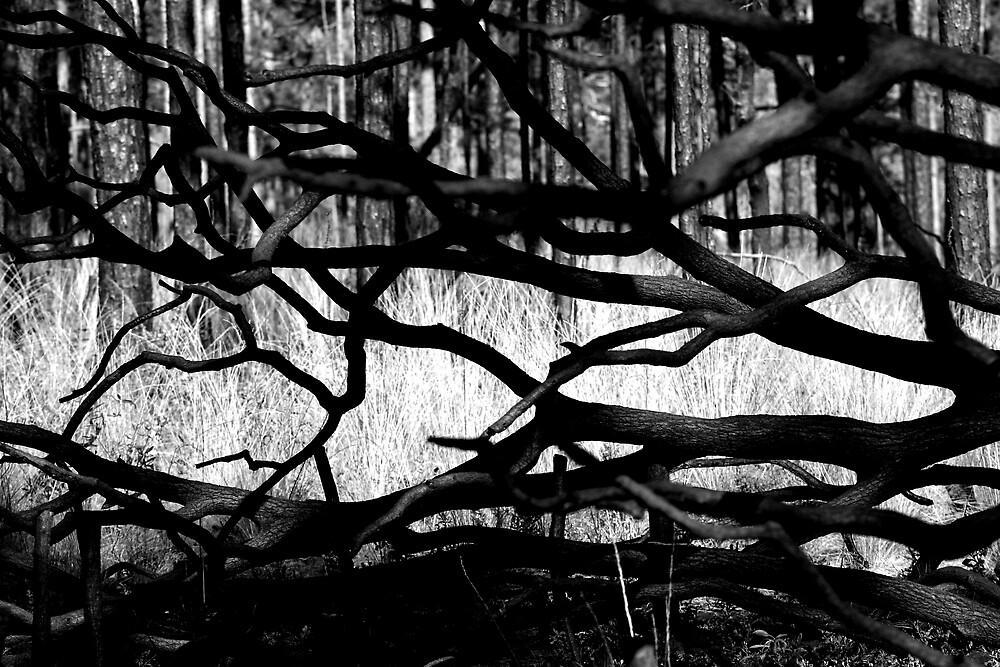Tangle by Dennis Blauer