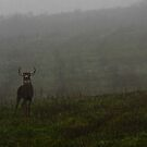 Misty Too,,,, by Benjamin Young