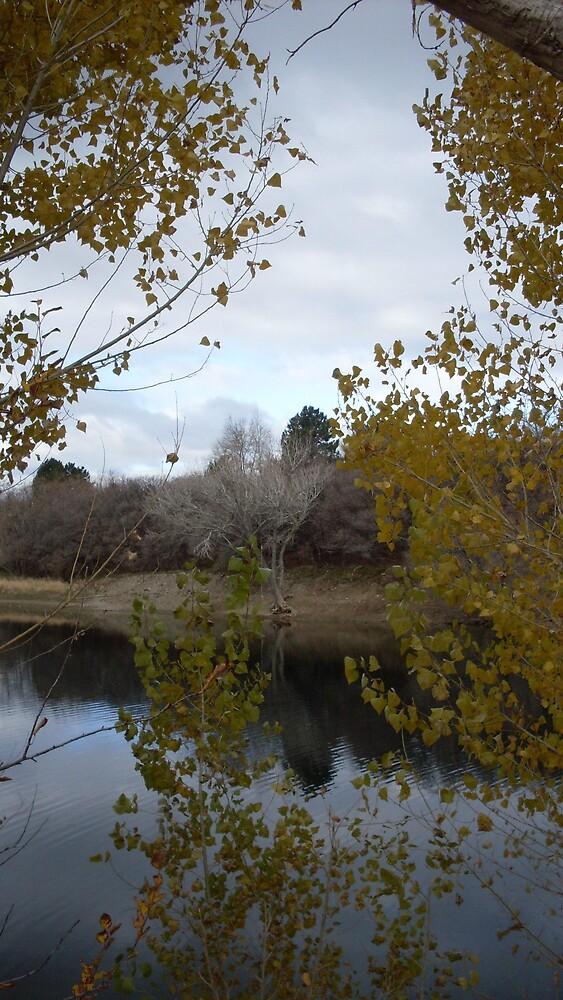 Farmington Pond in the Winter by Julie Gappmayer