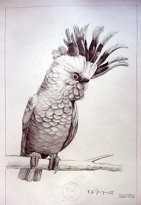 Bird by santa