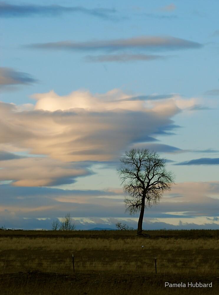 Lenticular Cloud by Pamela Hubbard