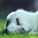 Sleep When I'm Dead by Craig Shillington