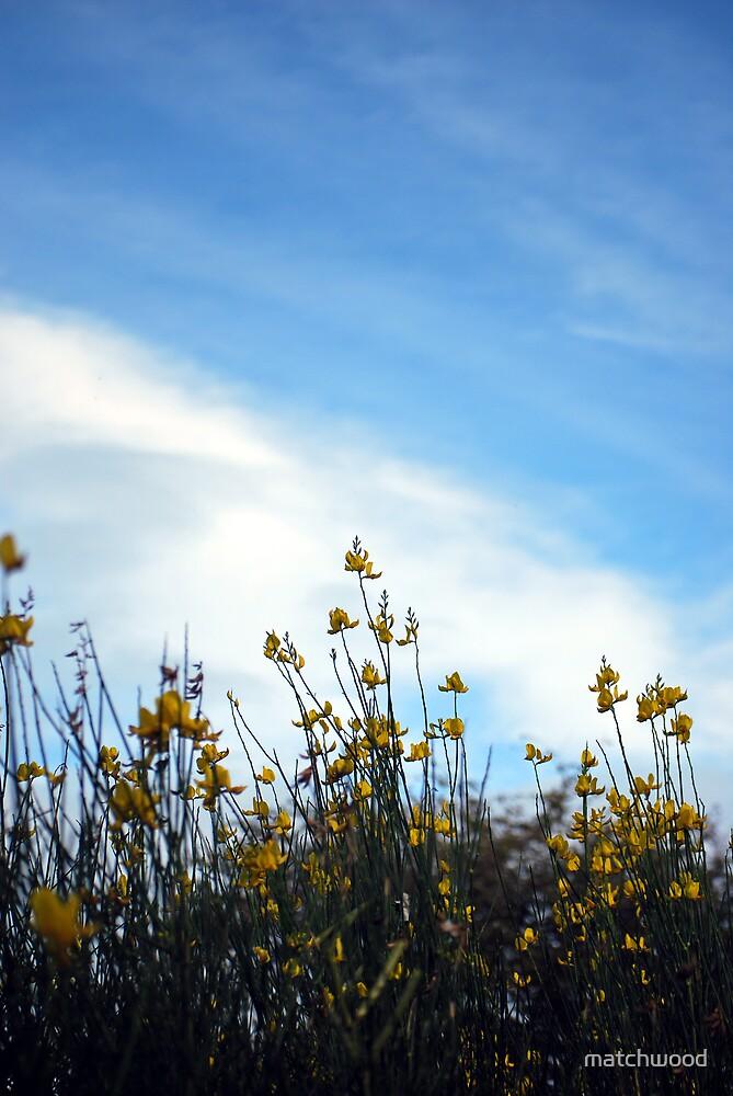 Sky by matchwood