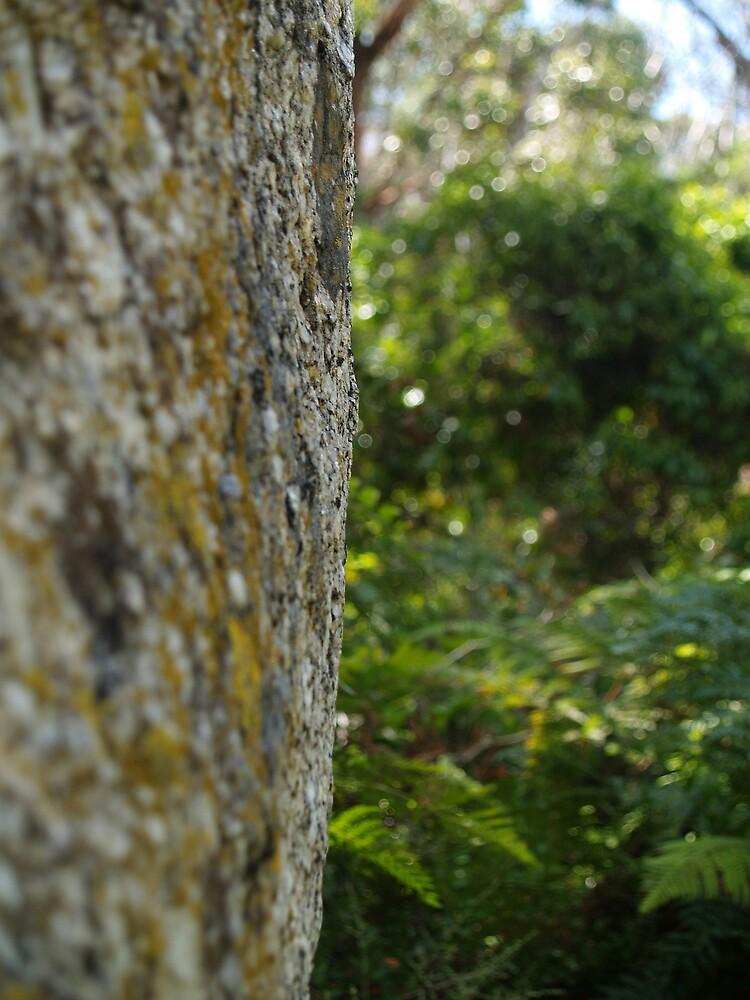 The rock by Ellimac