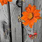 Orange Daisies on Wood by Rosalie Scanlon