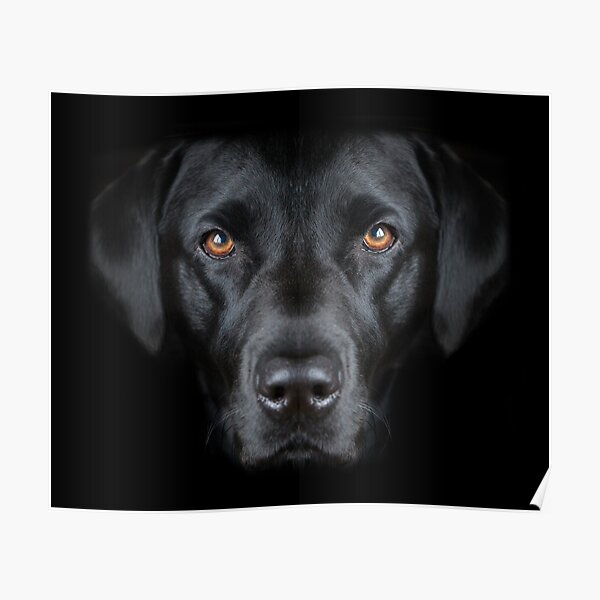 Year of the Dog Black Dog Poster