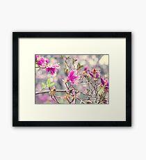 Pink Mystic Framed Print