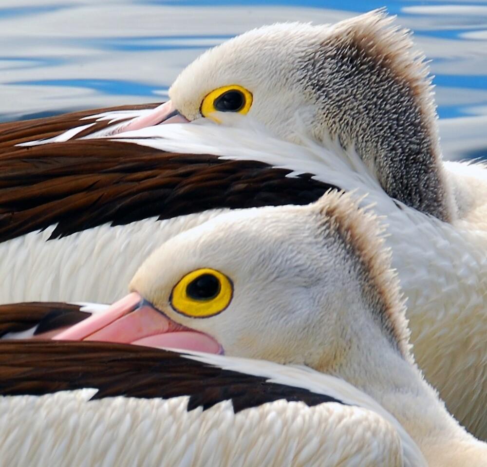 A Pair of Punk Pelicans....... by Gordon Pressley