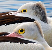 A Pair of Punk Pelicans....... by SPQQKY