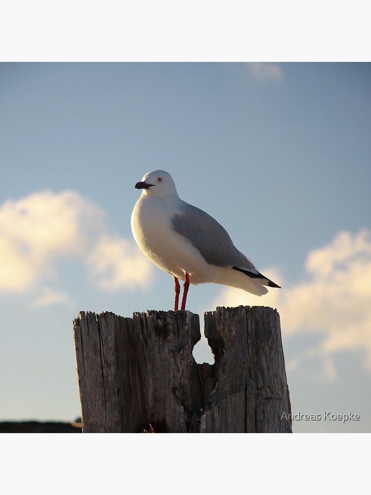Seagull by mistered