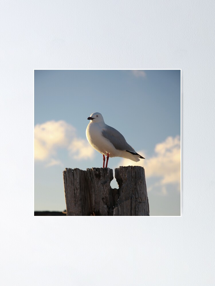 Alternate view of Seagull Poster