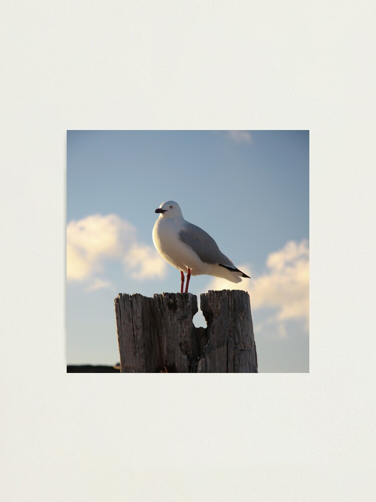 Alternate view of Seagull Photographic Print