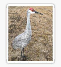 Sand Hill Crane (Hen) Sticker