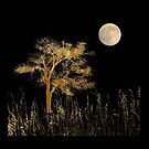 4591 by peter holme III