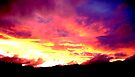 Night Sky pinehill by Beverley  Johnston