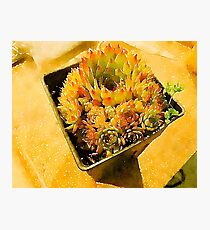 Hen & Chicks Succulent Photographic Print