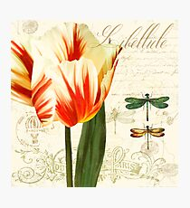 Labelliele Natural History Sketchbook II Botanical study dragon flies, tulip Photographic Print