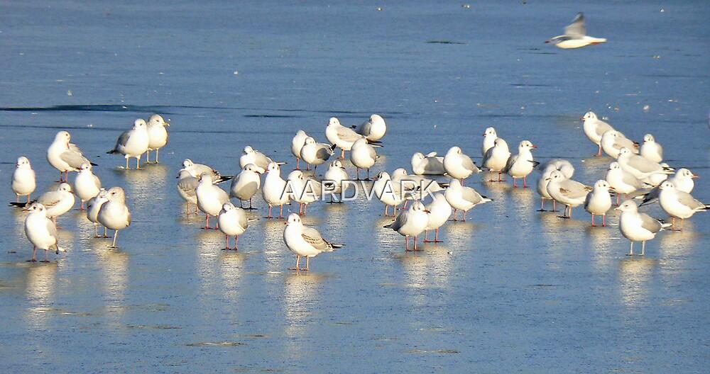 Gulls On Ice by AARDVARK