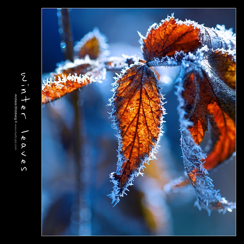 Winter Leaves by Andreas Stridsberg