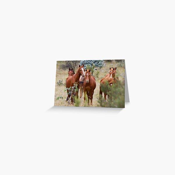 Wild Brumbies - Kosciuszko National Park, NSW Greeting Card