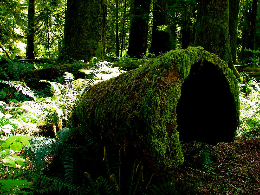 Cathedral Grove, Tofino, Canada by C1oud