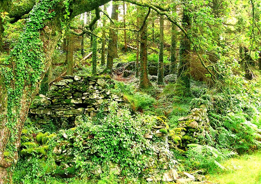 Serene Wood by satwant