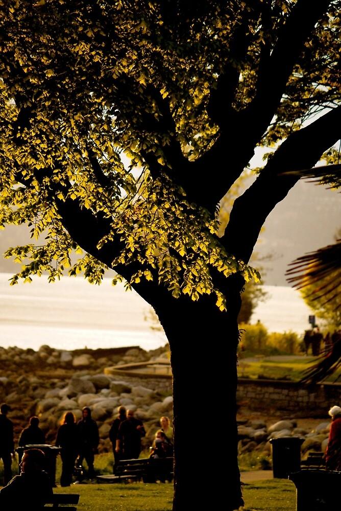 English Bay Tree by Rae Tucker