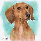 Portrait of a Dachshund in Watercolor with Turquoise Background  by ibadishi
