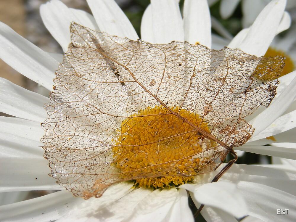 Filigree leaf by ElsT