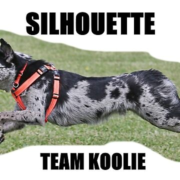 Silhouette Team Koolie, Luca by KoolieClubAust