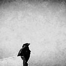 twilight by Ushna Sardar