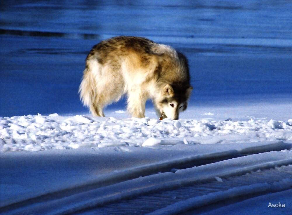 Winterwolf by Asoka