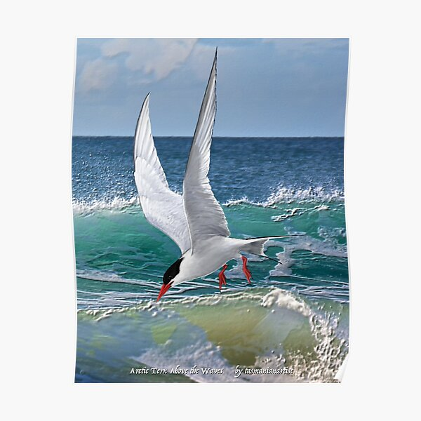 GALLIMAUFRY ~ JUST PHOTOS ~ SCENES & SCENERY ~ D1G1TAL-M00DZ ~ Arctic Tern Above the Waves by tasmanianartist Poster